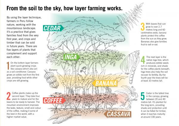 layer farming