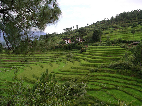 Bhutan the world s first organic country make wealth for What does terrace farming mean