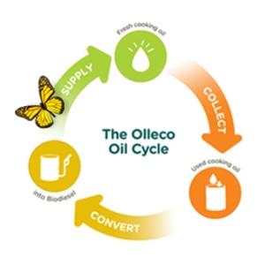 Olleco-350