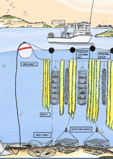 ocean-farming