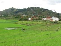 madagascar-rice