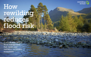 rewilding-floods