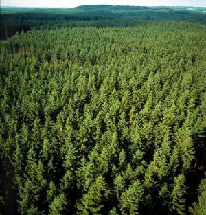 sweden-forest